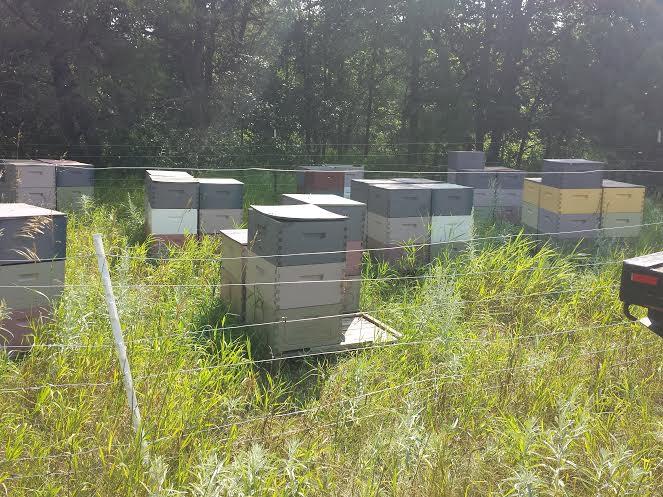 Book Journey, Sheila DeChantal, Amanda Buck, s Busy Bees