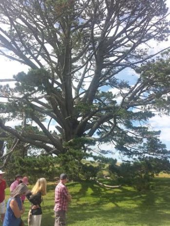 The Party Tree in Hobbiton Village... considered to be one of the most famous trees in the world.